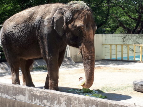 姫路市立動物園に行ってきた。ゾウの姫子、昼食。
