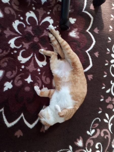 溶けて床に落ちてる黄色猫きなこ