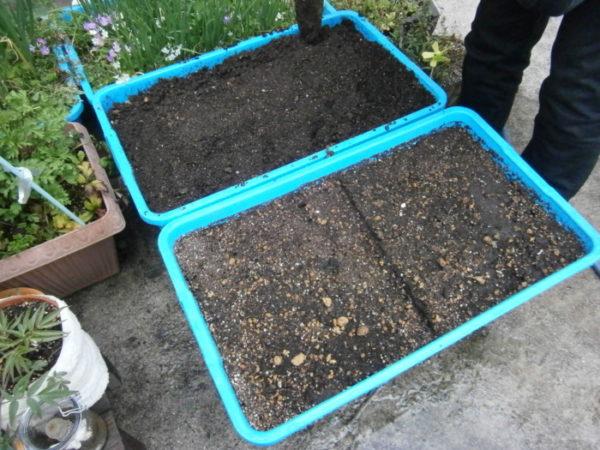 初夏の家庭菜園【巨大プランターで】