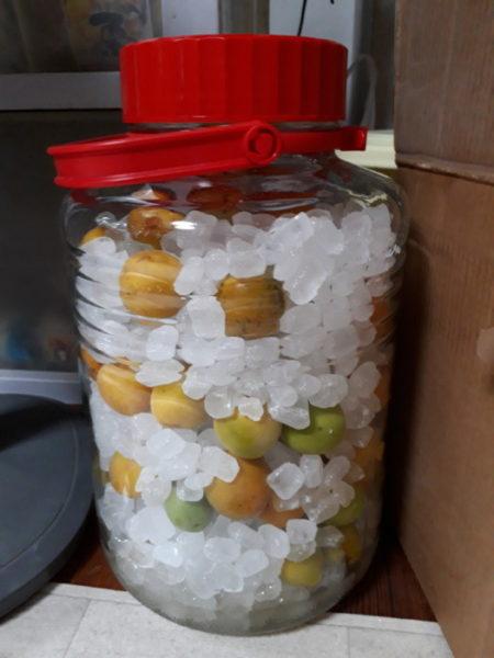 ぷこ母と梅ジュースを作ります