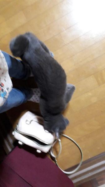 6/11~の猫たちの様子【~ペットシッターさんに頼んで~緊急事態発生!】
