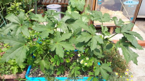 1ヶ月以上放置してたお庭のお世話を再開。
