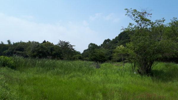 高鍋湿原をぶらぷっこ