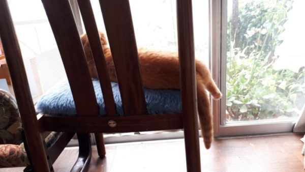 1ヶ月+10日間、ペットシッターさんに猫たちを頼んでみて。