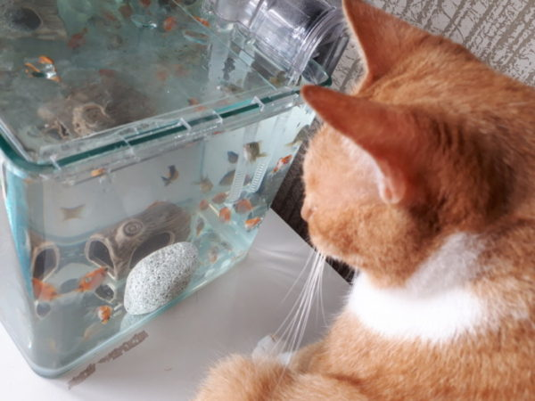 ピンポンパールを始めてみた黄色猫きなこ