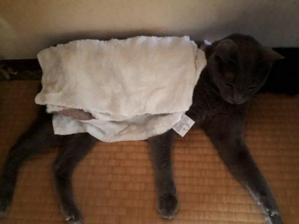 猫の熱中症対策・濡れタオルで