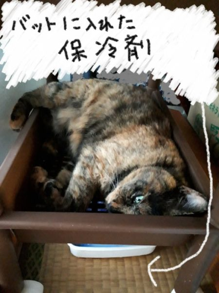 猫の熱中症対策・保冷剤
