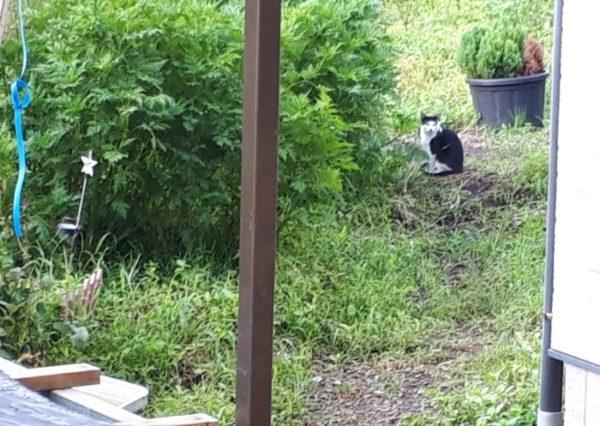 実家の隣の猫・前髪パッツン