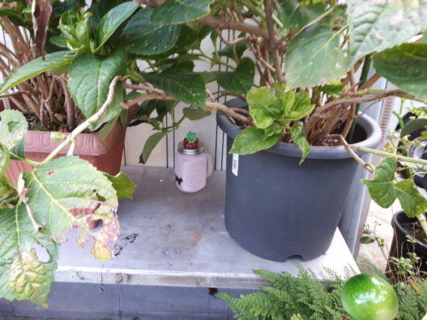 作った小物をお庭に置いてみる。