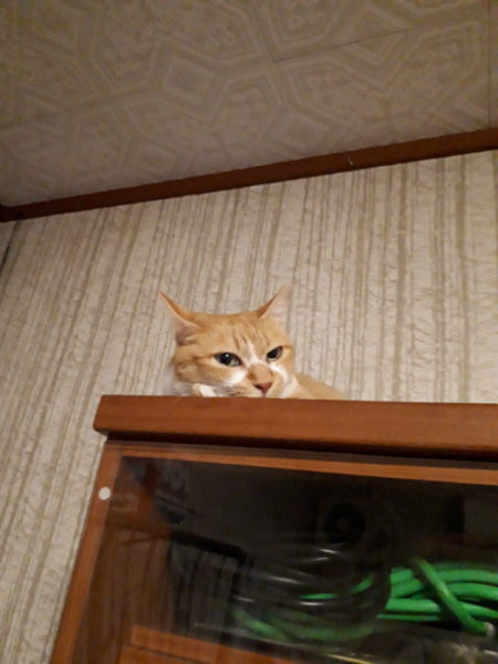 我が家の猫ズの脱走の手口。