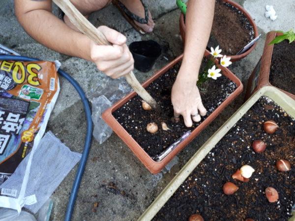 お庭にお花を増やします