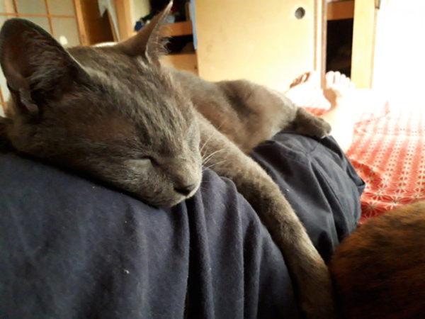 猫が脱走して戻らない時の対処法。