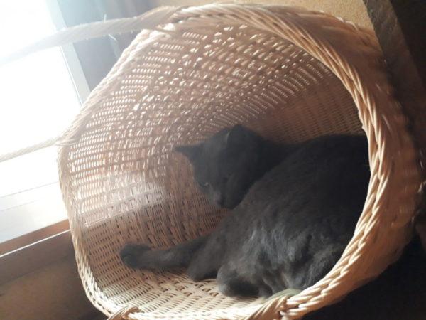 灰色猫ししゃものささやかな抵抗