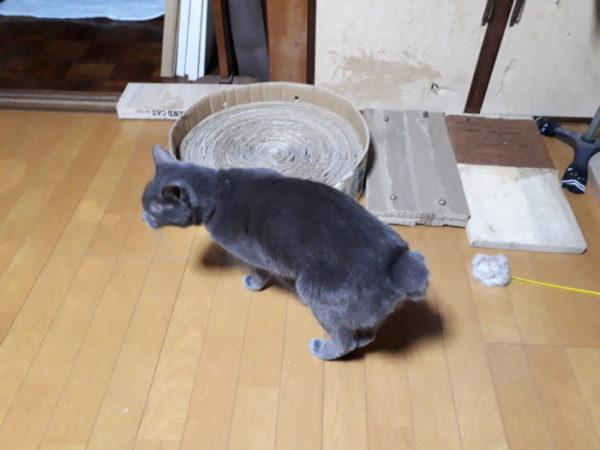 猫の爪とぎを自作する【段ボール&麻紐】