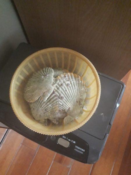 ヒオウギガイの貝殻でインテリア小物作った。