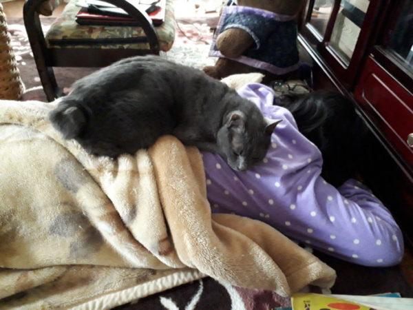 うつぶせで寝る人の背中で寝る灰色猫ししゃも
