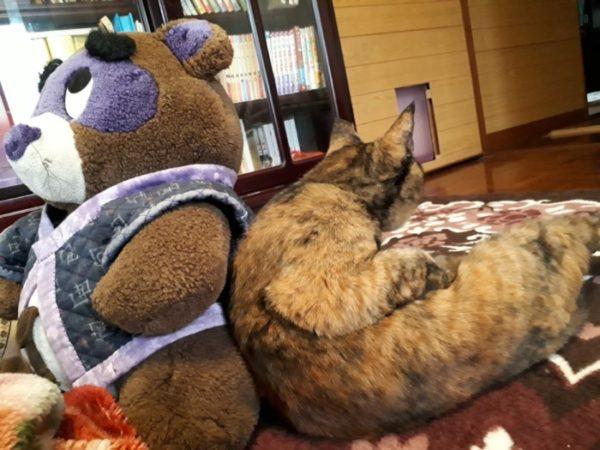 互いの背中をかばい合うたぬきとサビ猫