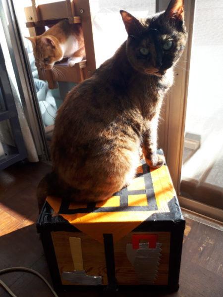窓辺で朝日を浴びる猫たち