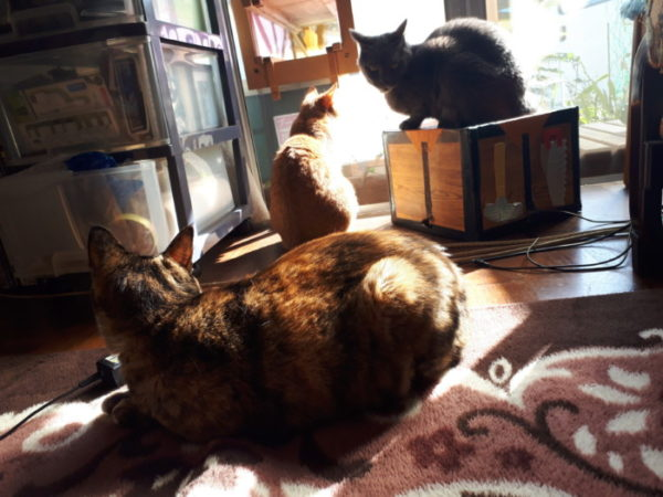 光合成する猫たち