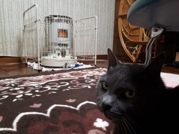 今年もぷっこ家は冬支度【猫とダルマストーブ】