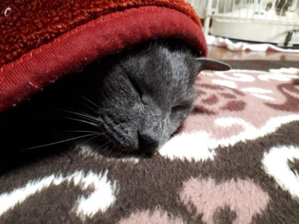 寒いと猫とヒトの距離が縮まる