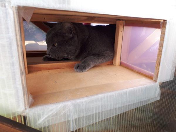 """猫用サンルーム""""にゃんルーフ""""をDIYで増築・その1"""