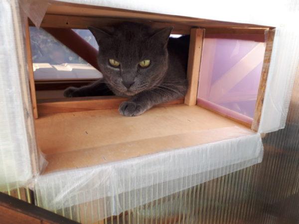 """猫用サンルーム""""にゃんルーフ""""をDIYで増築・その3"""