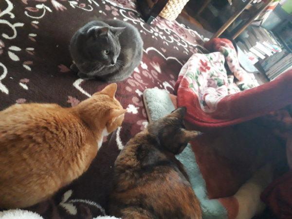 冬の、猫の為の寒さ対策。