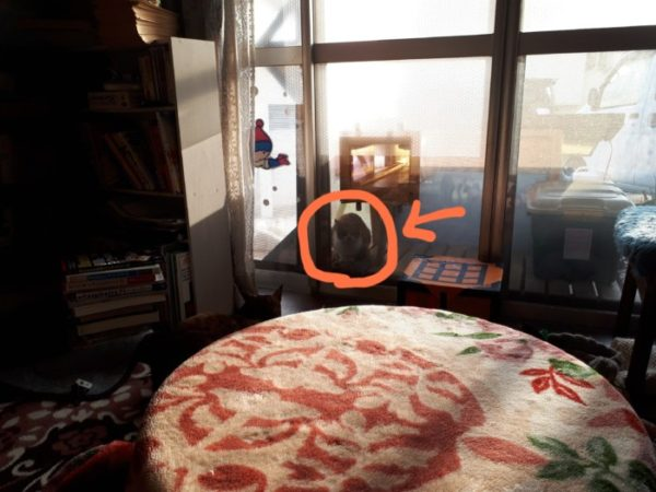 見知らぬ仔猫が家の周りをうろついていて、物欲しそうにこちらを見ているけど、どうしよう?(*´Д`)