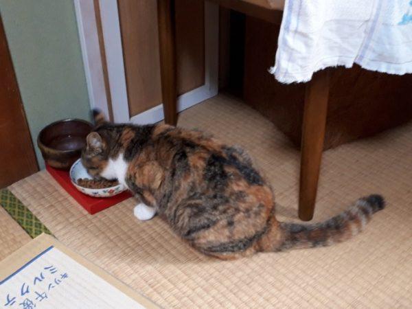 子猫を保護したら【ぷっこ家で準備したこと】