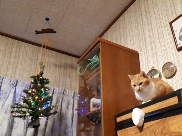 メリークリスマス2019