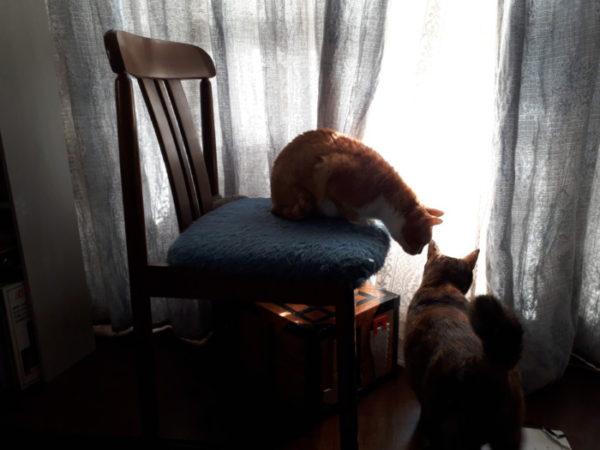 ステキな休日の朝の過ごし方【DIYした猫用サンルームのその後】