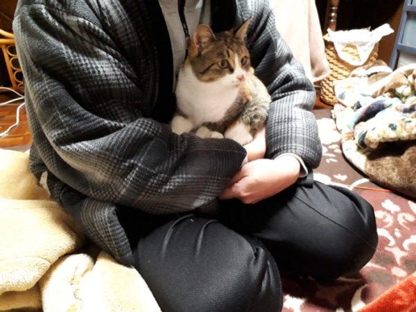 保護した子?猫、先住猫と対面