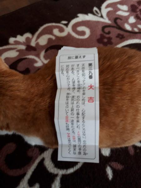 大吉のおみくじと黄色猫きなこ