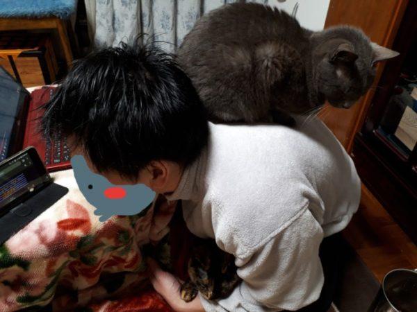 猫たちの座布団になっている人