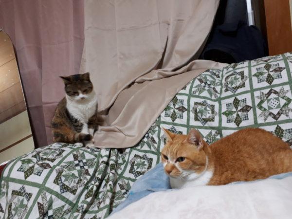 家族が増えました【家の周りで鳴いてた子猫(?)を家族に迎え入れ】