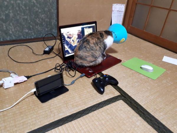 パソコンに陣どる子猫
