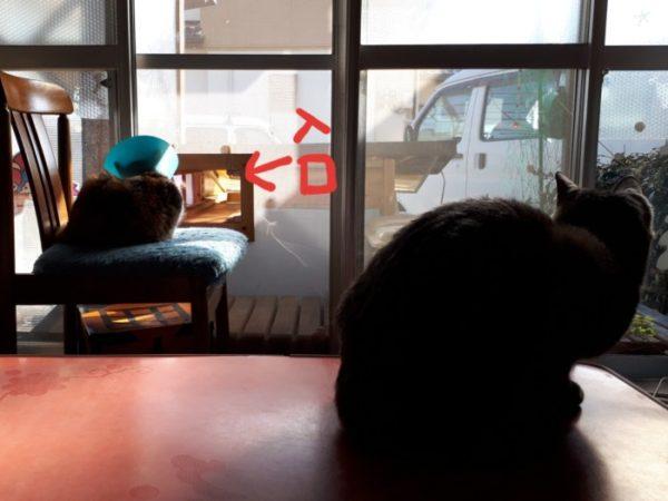 今明かされる、空き缶荒らしの犯猫。