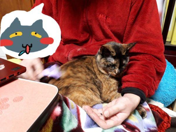 ファーミネーターは、猫毛フェルト制作に向いてる気がする