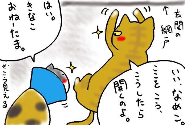 新入り猫に悪事を教える黄色猫きなこ(ФωФ)。
