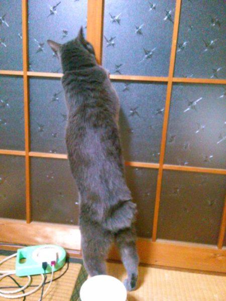 """ちょっとの手間で長年の""""めんどくさい!""""を解消。【襖に猫用出入口をDIY】"""