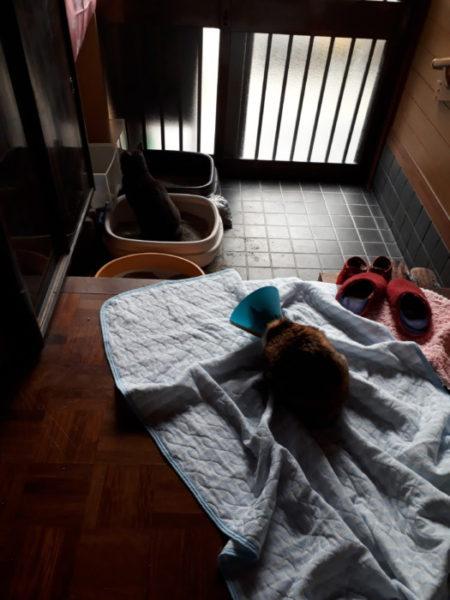 冬の、猫の為の寒さ対策【猫トイレを少しでも快適に】