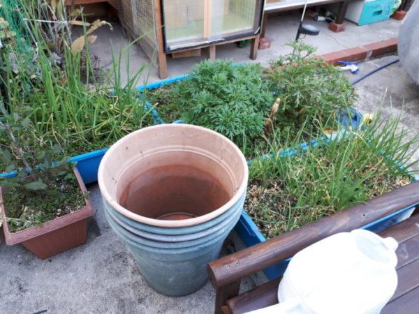 春に向けてハーブ苗の植え替え。