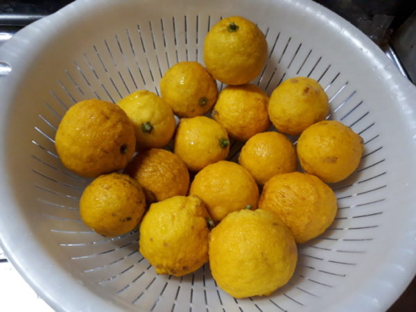 柚子でリモンチェッロ作った