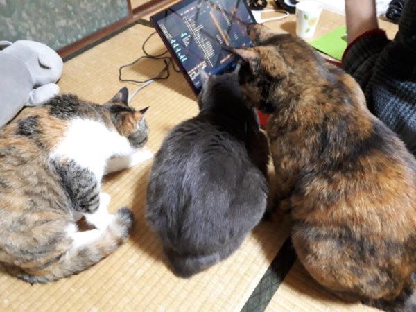 ファンヒーターで暖まる猫たち