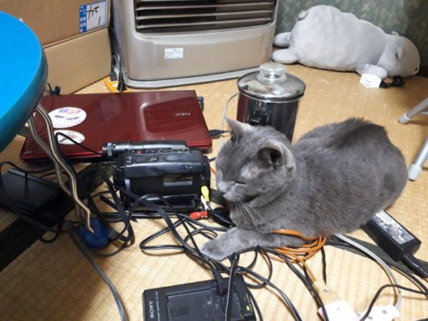 散らかったコードと灰色猫ししゃも