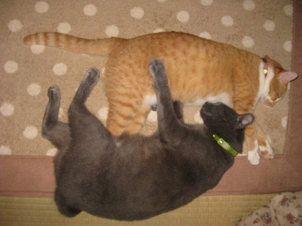 新入りなめこと先住猫との関係【保護して約2ヶ月経過】