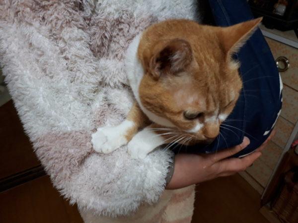 猫の抱っこ紐は風呂敷で代用できるっぽい。