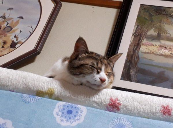 猫をかぶっていた三毛猫なめこ。