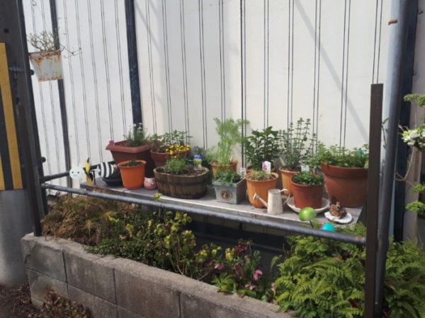 春のガーデニング祭り【紫陽花と多肉植物の植え替え&ハーブの移動】